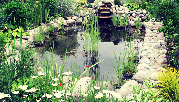 Hampshire Handyman Services pond care and maintenance